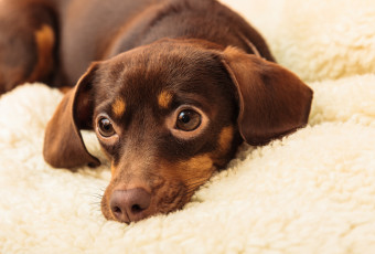 Are you Grieving Over A Pet? Consider a Pet Funeral to Celebrate the Life you Shared!